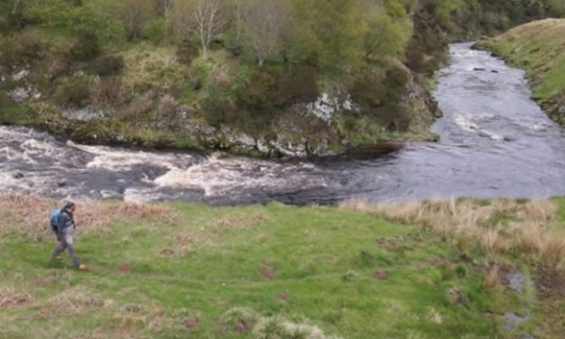 Northumberland trout on dry flies