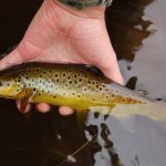 fly fishing tips and essentials for beginners