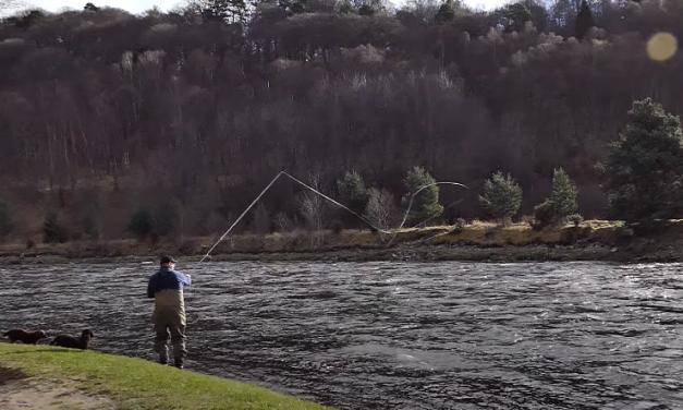 Spring Salmon Fishing