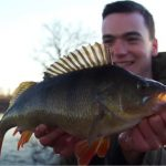 Complete guide to catching Perch with dropshotting and lure tactics