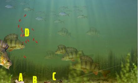 Prawn Fishing Rig for Big Perch