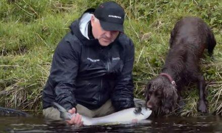 River Thurso Salmon fishing