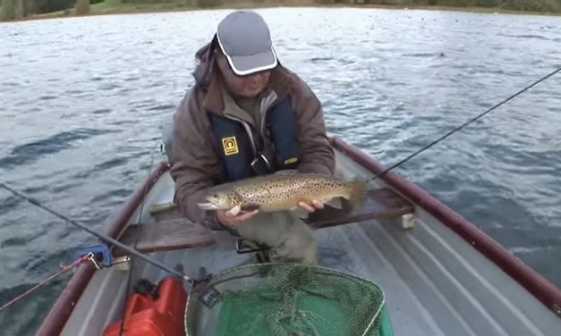 Fry Feeding Trout in the Autumn